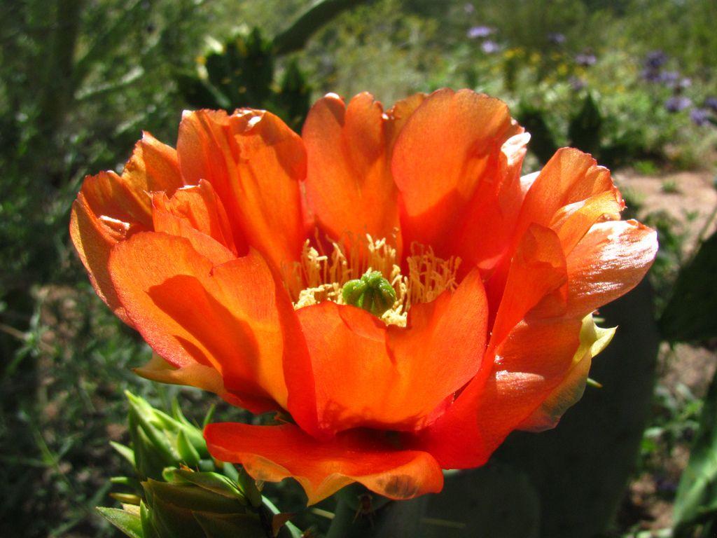 desert botanical garden11 Desert Botanical Garden at Papago Park, Phoenix