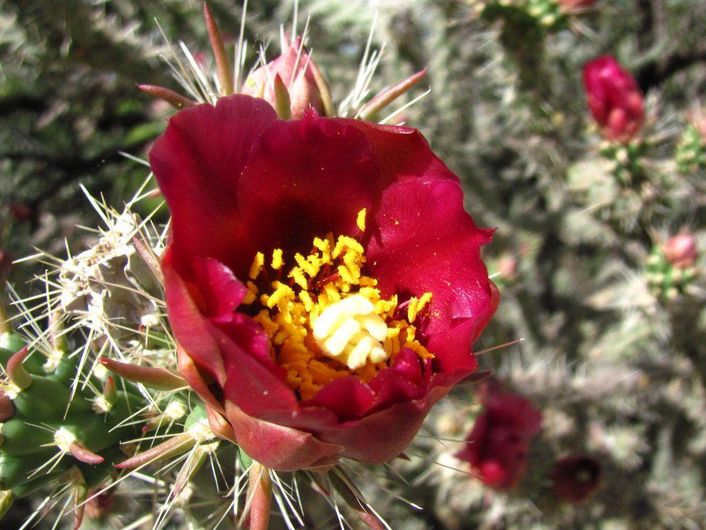 desert botanical garden12 Desert Botanical Garden at Papago Park, Phoenix