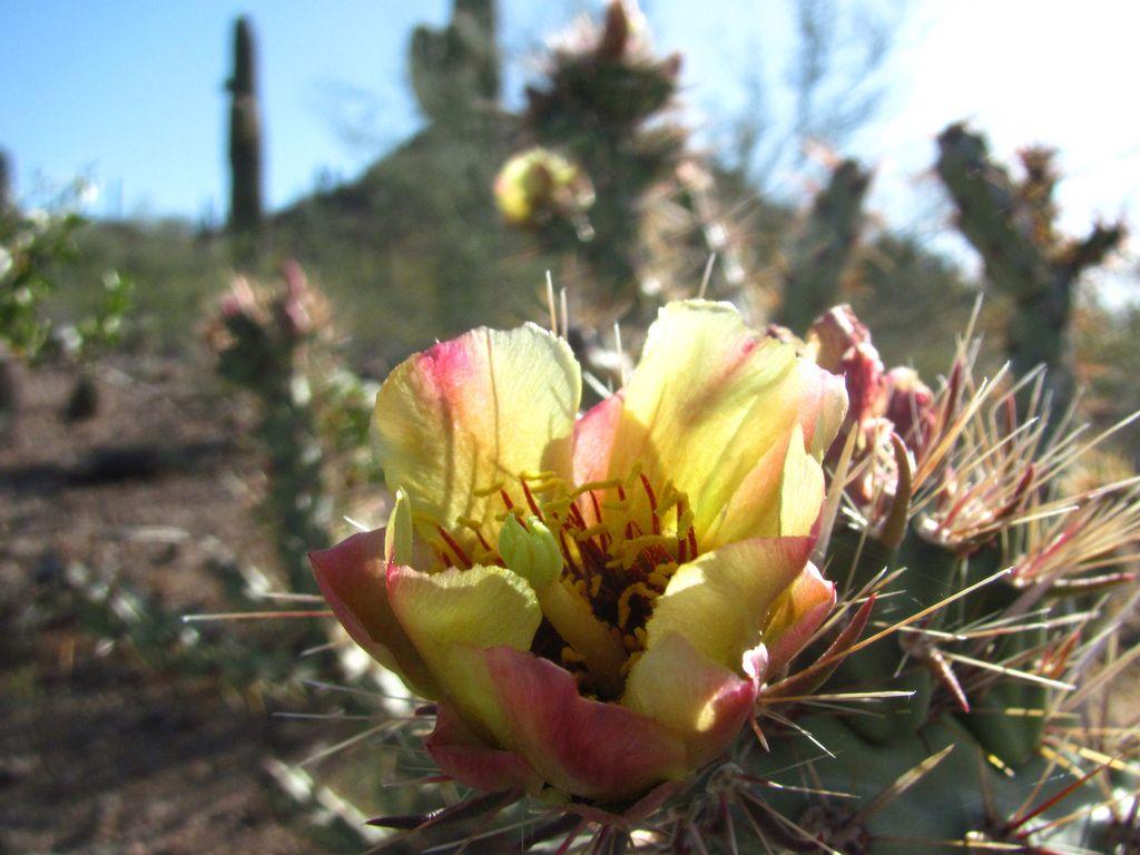 desert botanical garden14 Desert Botanical Garden at Papago Park, Phoenix