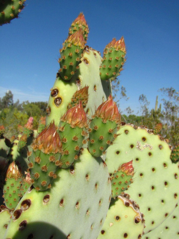 desert botanical garden4 Desert Botanical Garden at Papago Park, Phoenix