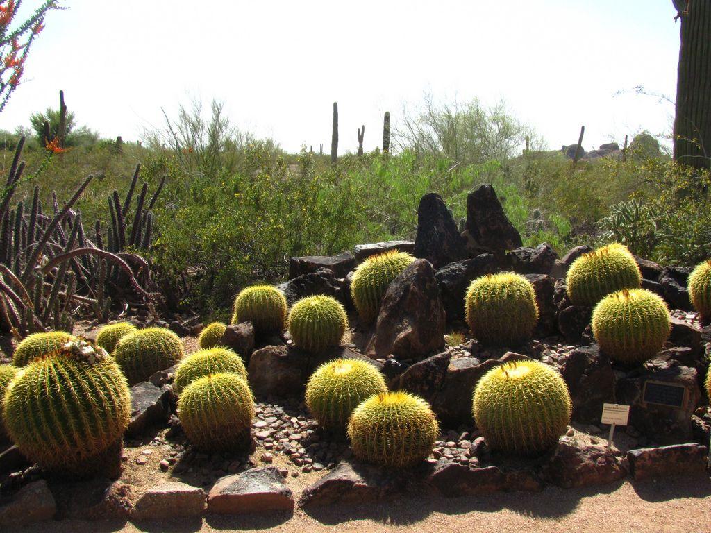 desert botanical garden6 Desert Botanical Garden at Papago Park, Phoenix