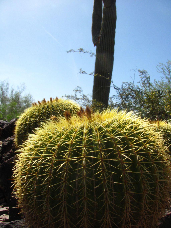 desert botanical garden9 Desert Botanical Garden at Papago Park, Phoenix