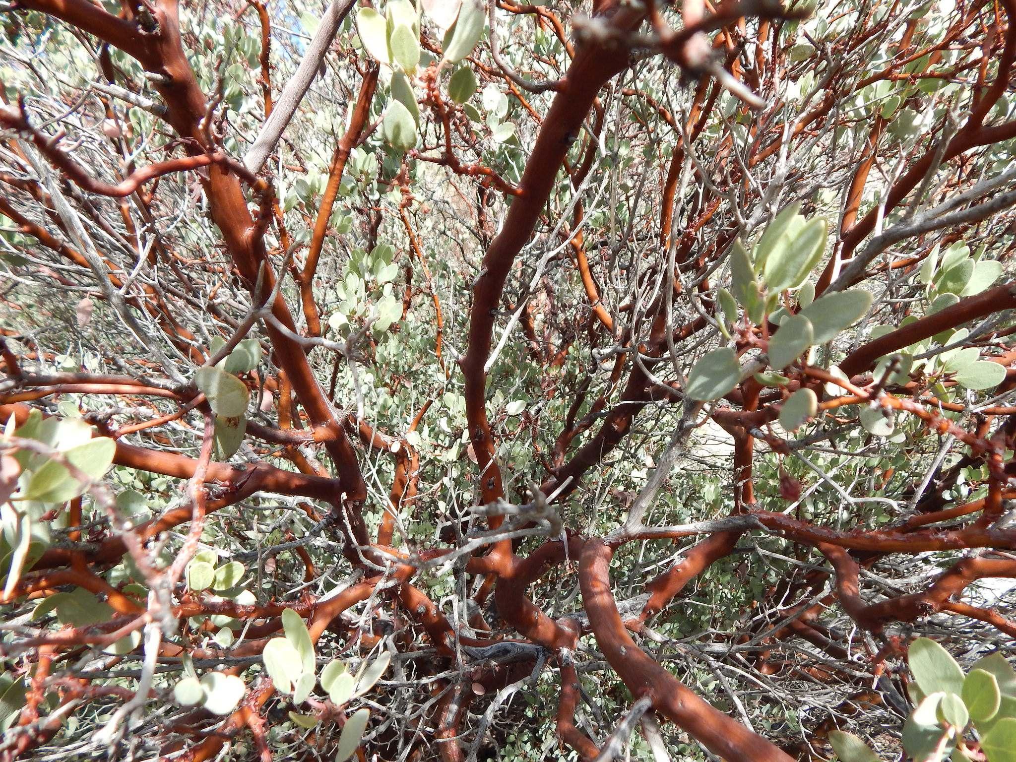 joshua tree national park8 Joshua Tree National Park Photos