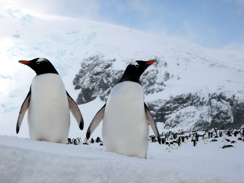 antarctica A Land of White   Cuverville Island, Antarctica by David Stanley