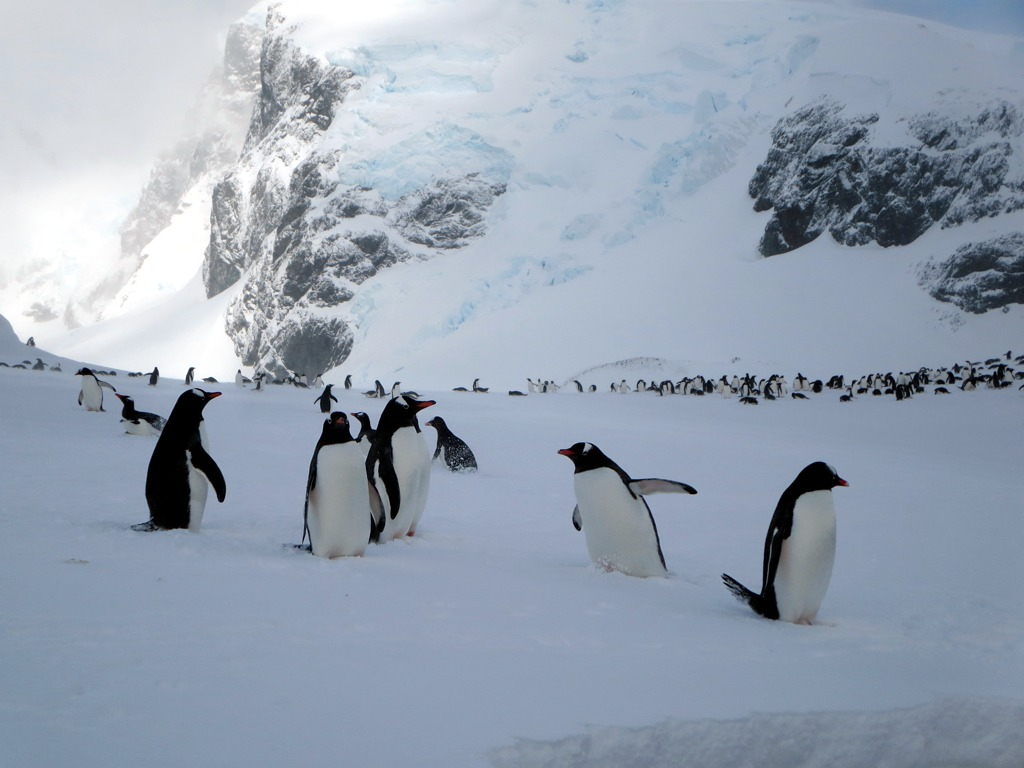 antarctica1 A Land of White   Cuverville Island, Antarctica by David Stanley