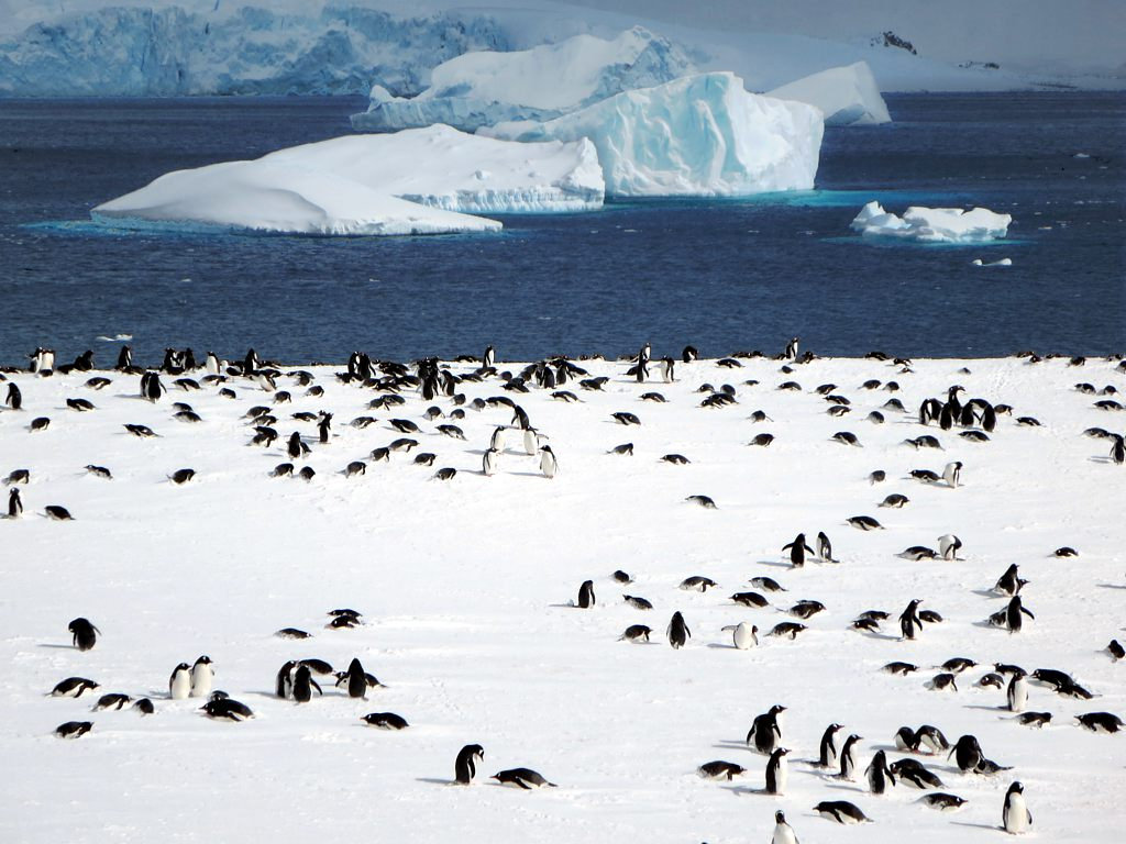 antarctica2 A Land of White   Cuverville Island, Antarctica by David Stanley