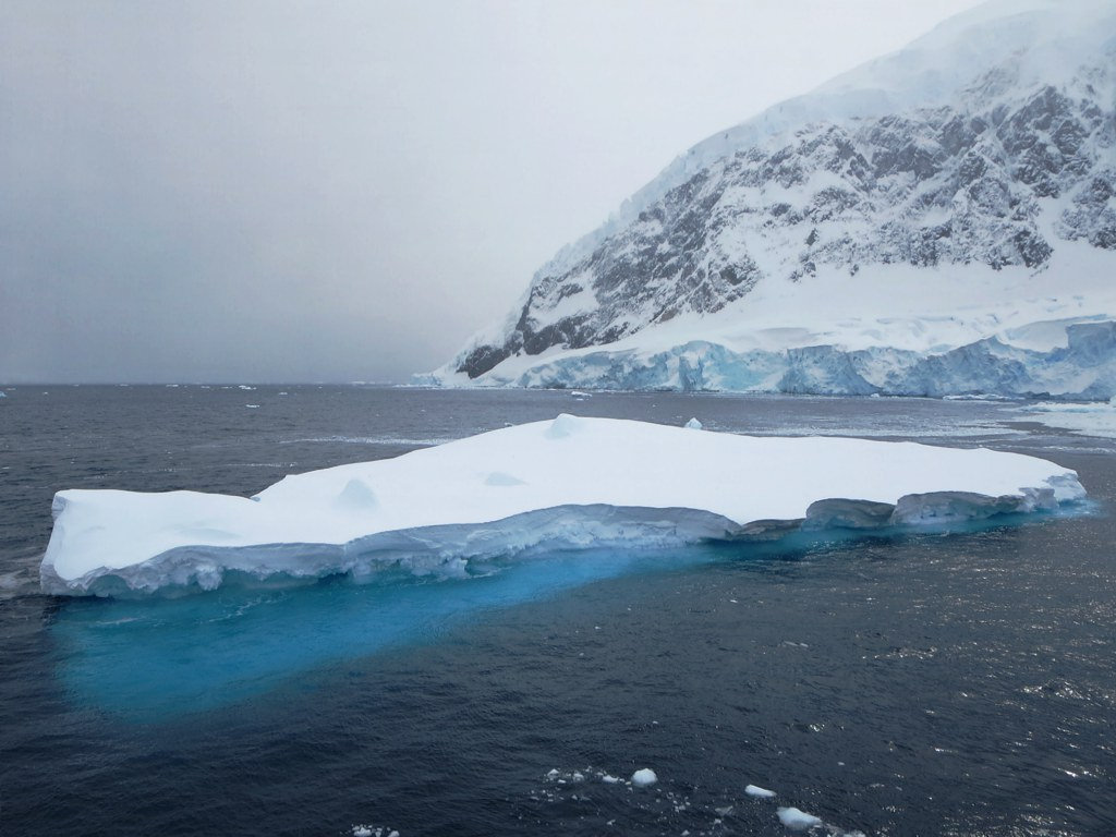 antarctica9 A Land of White   Cuverville Island, Antarctica by David Stanley