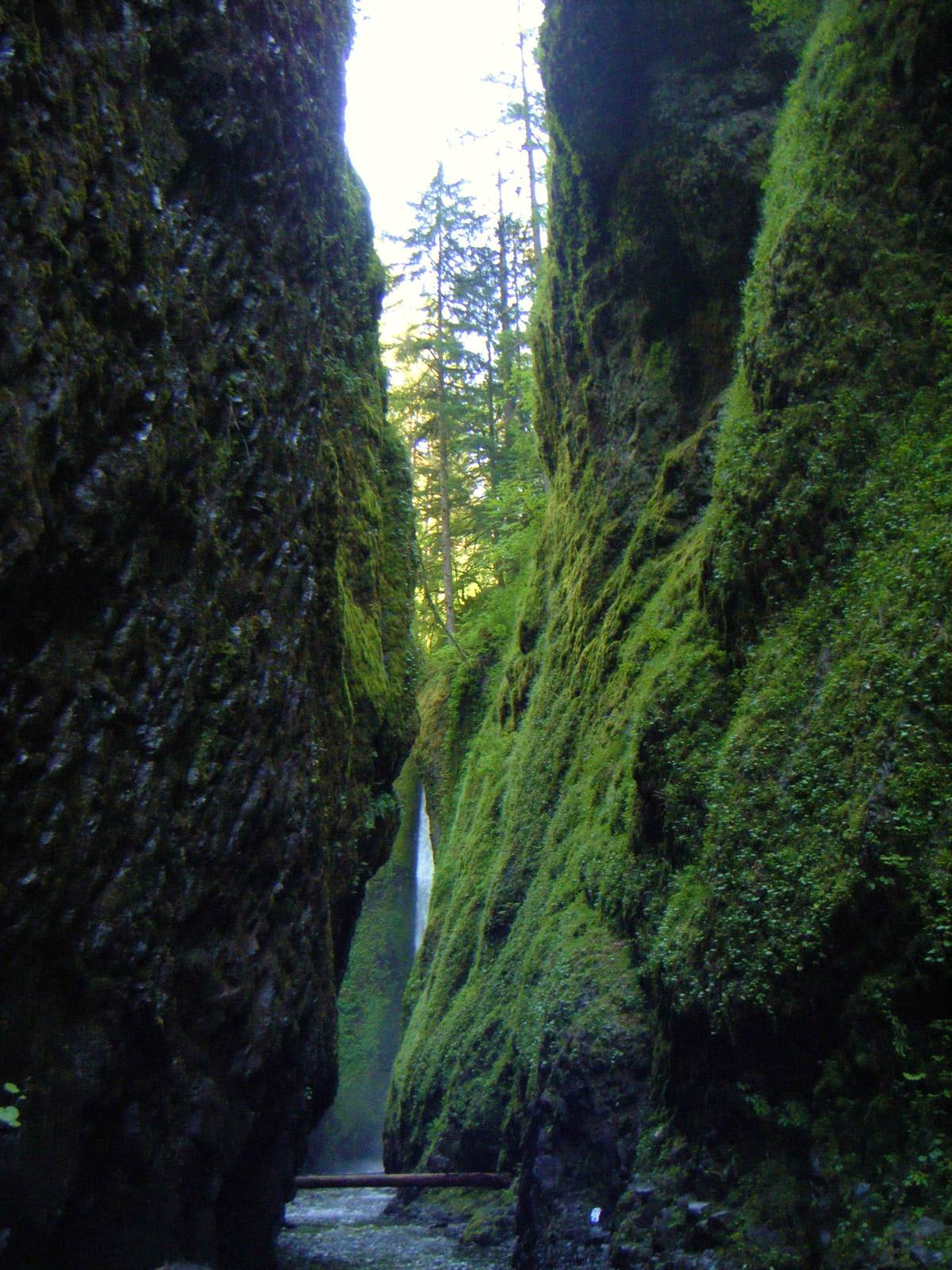 oneonta1 Oneonta Gorge Hike, Oregon