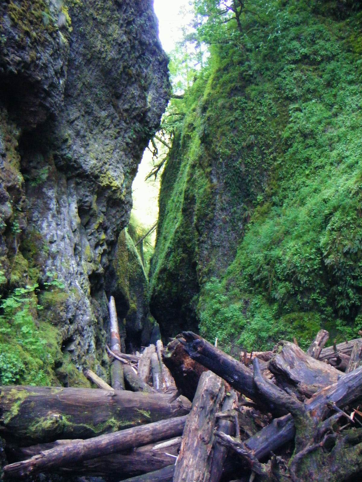 oneonta5 Oneonta Gorge Hike, Oregon