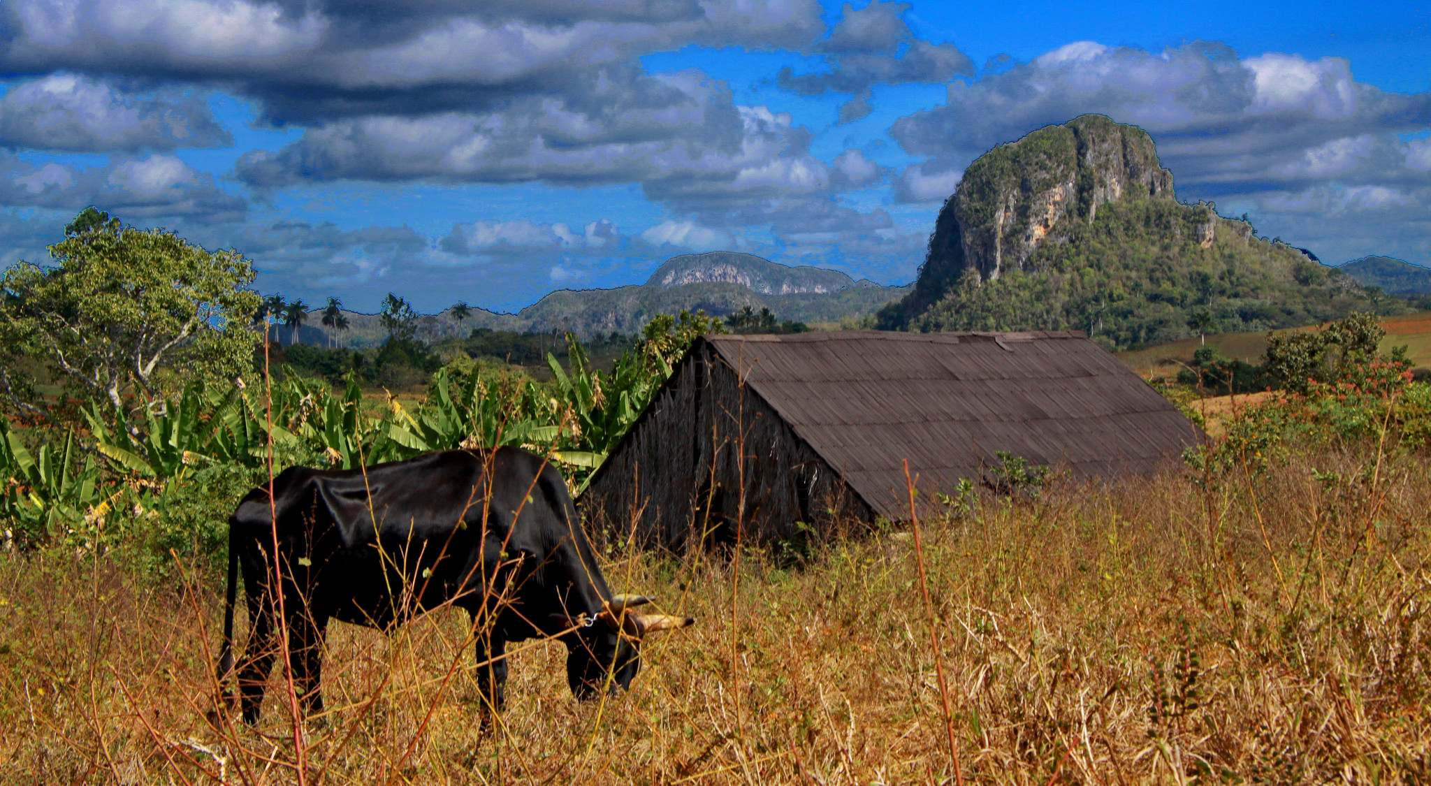 vinales valley3 Vinales Valley   UNESCO World Heritage Site