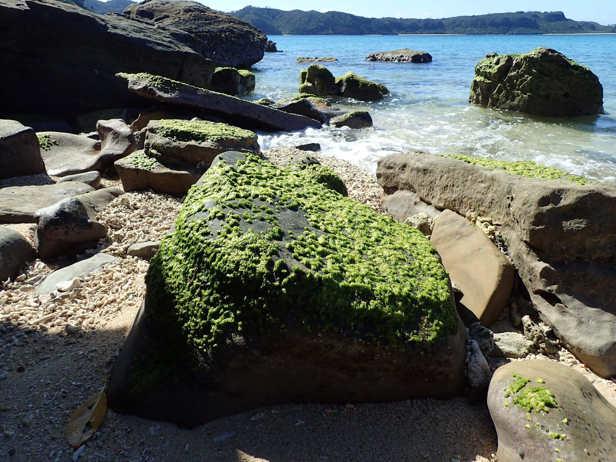 yaeyama7 Yaeyama Islands   Japans Treasure