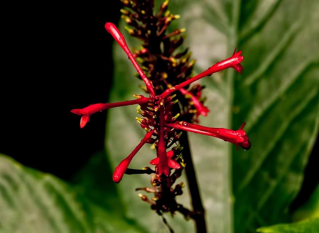puerto rico el yunque10 El Yunque Rain Forest in Puerto Rico