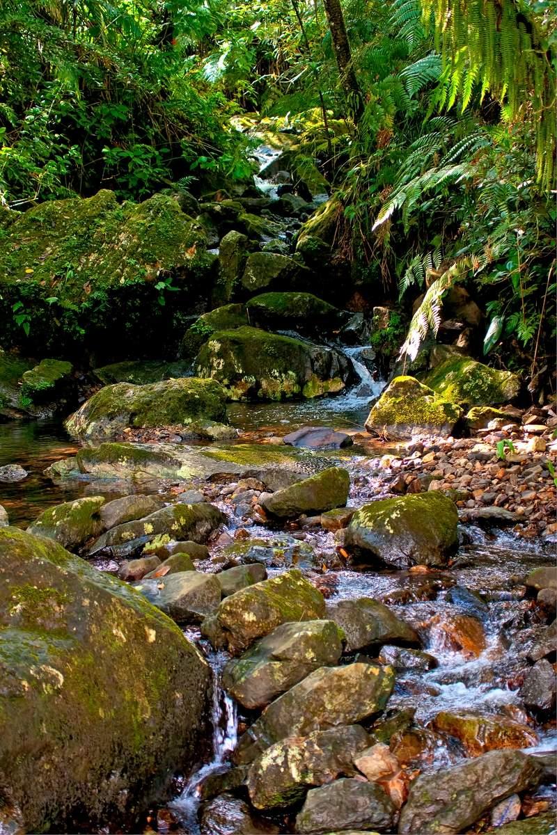 puerto rico el yunque13 El Yunque Rain Forest in Puerto Rico