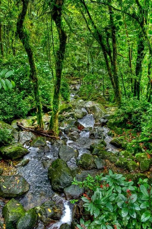 puerto rico el yunque3 El Yunque Rain Forest in Puerto Rico