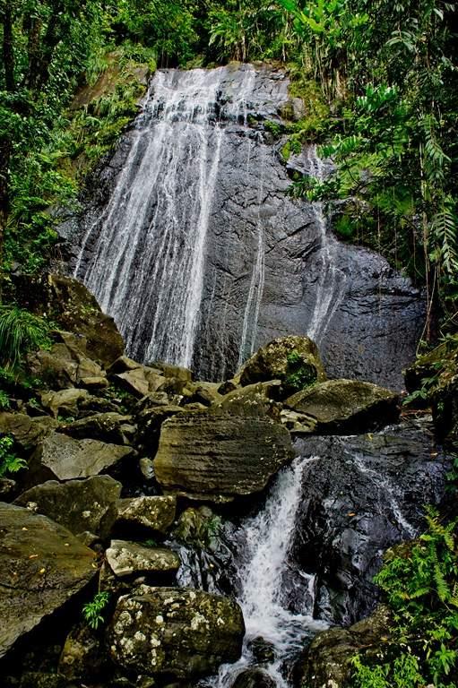 puerto rico el yunque4 El Yunque Rain Forest in Puerto Rico