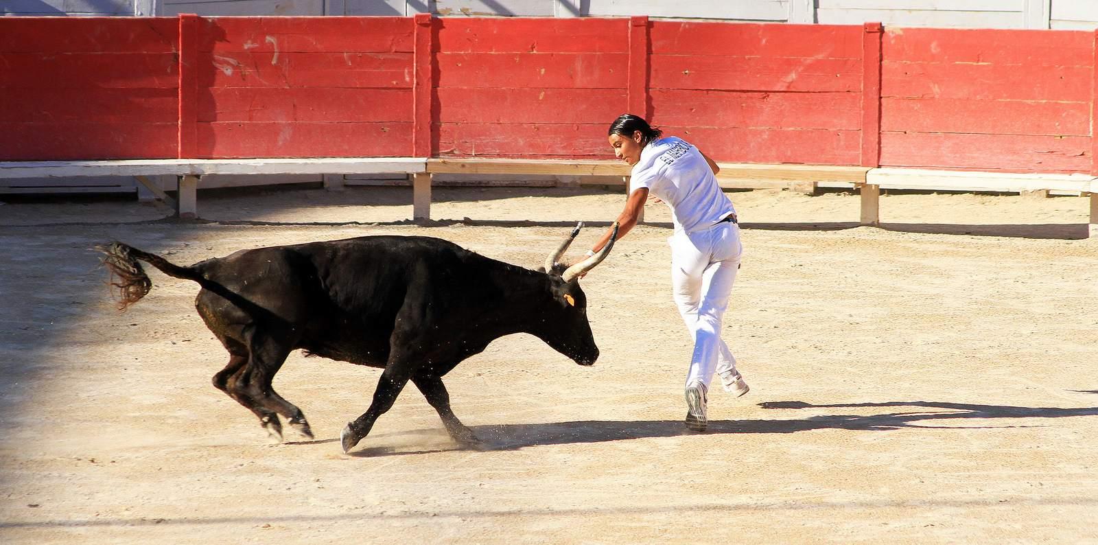 arles Bull Fighting in Arles Arena