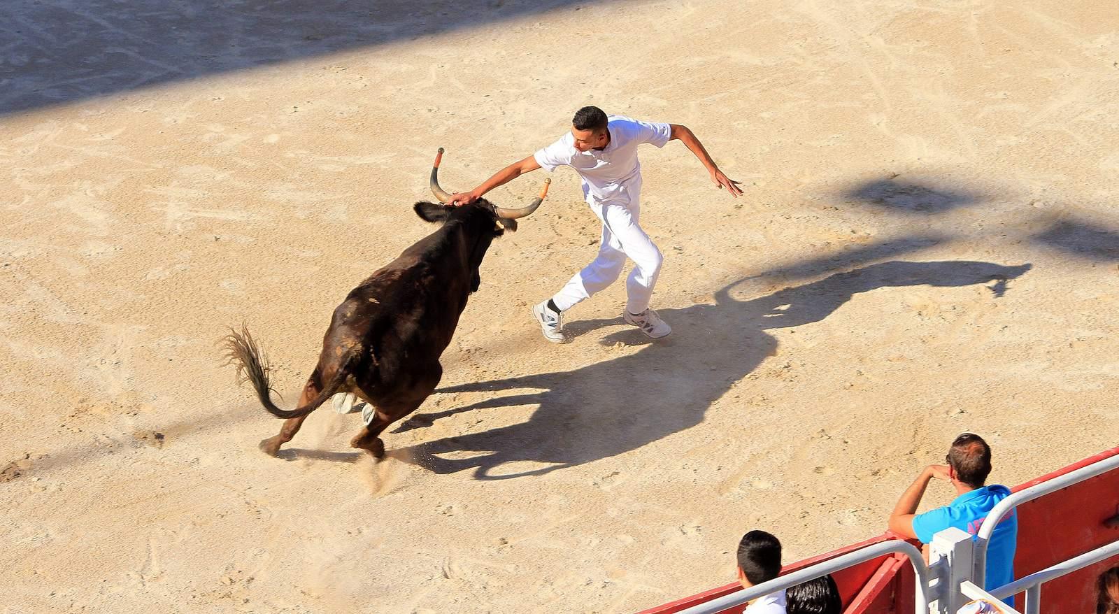 arles2 Bull Fighting in Arles Arena