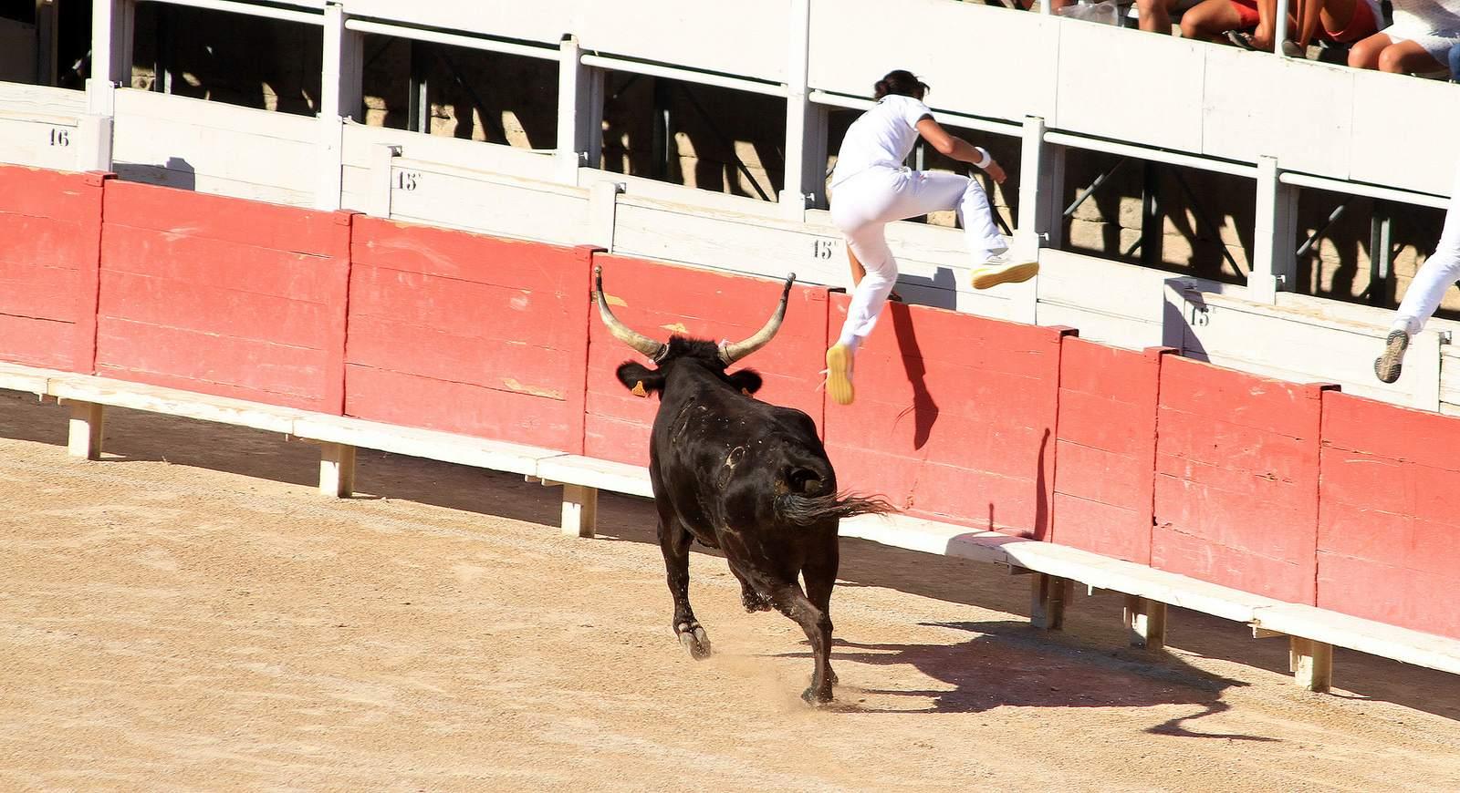 arles4 Bull Fighting in Arles Arena