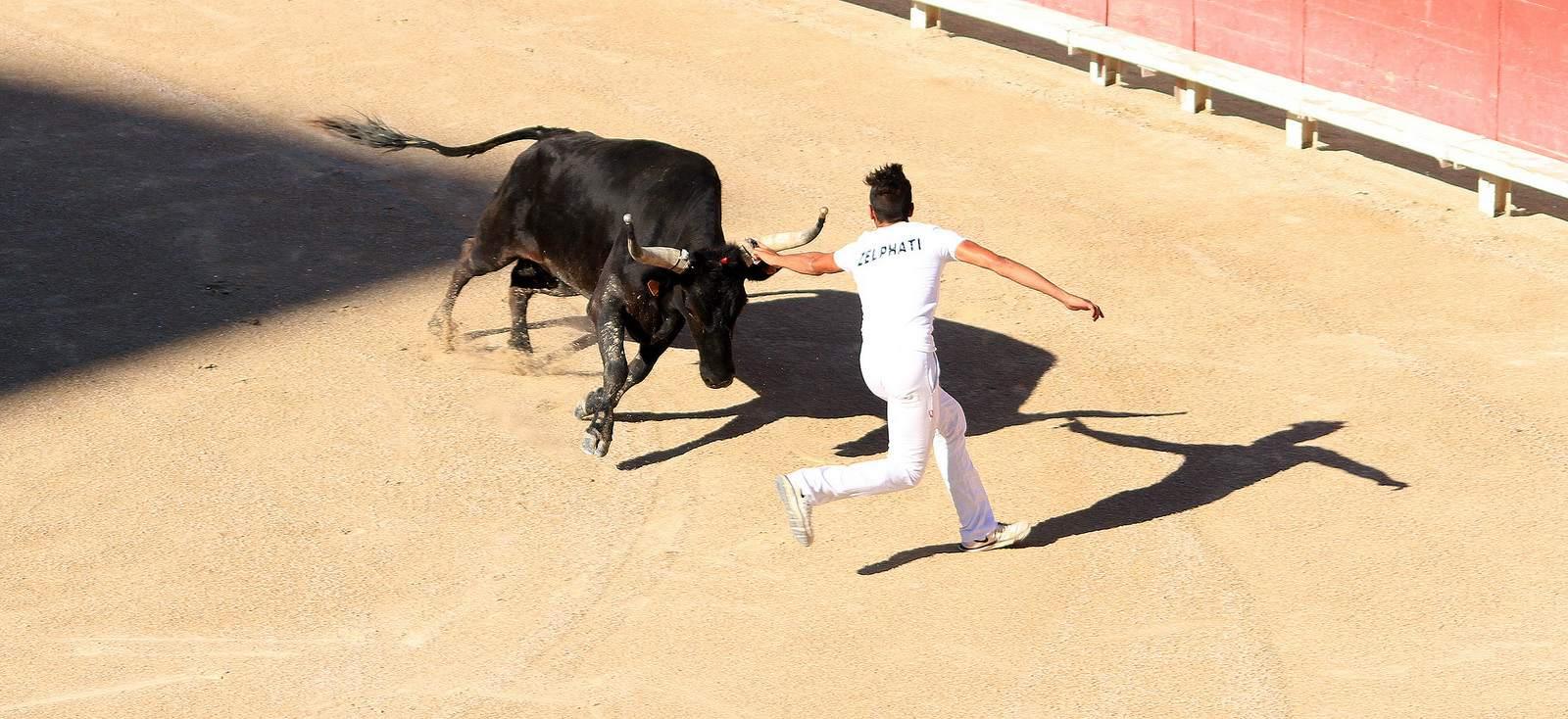 arles6 Bull Fighting in Arles Arena