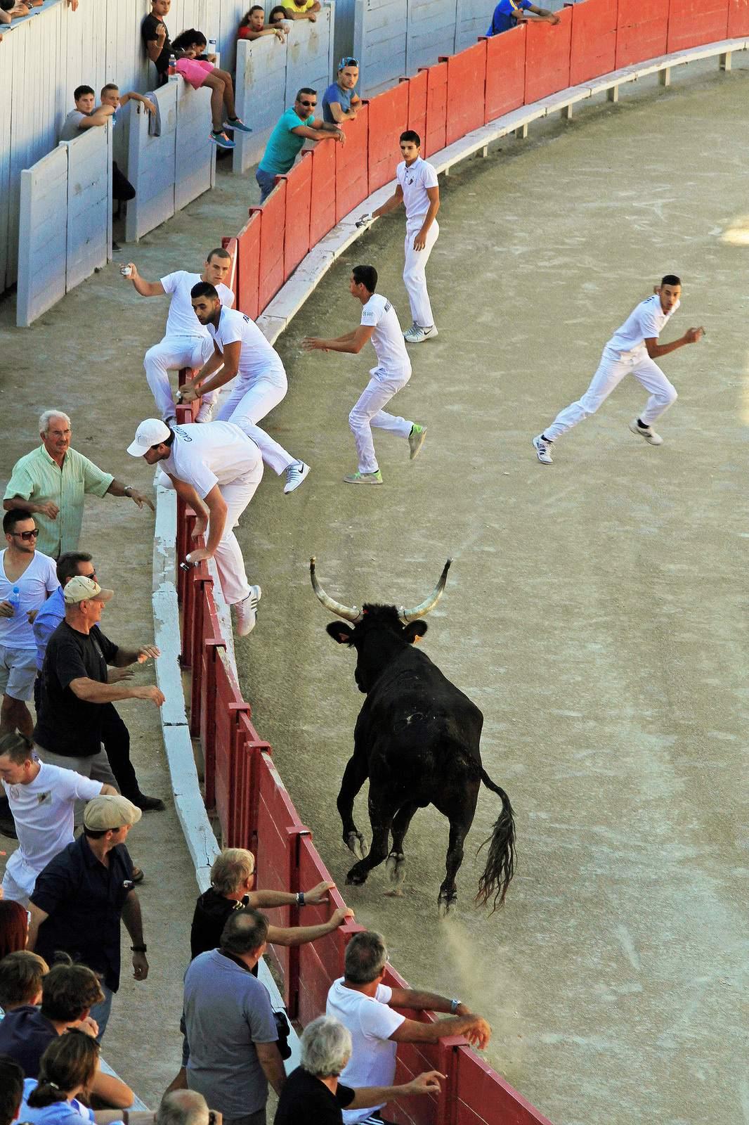 arles8 Bull Fighting in Arles Arena