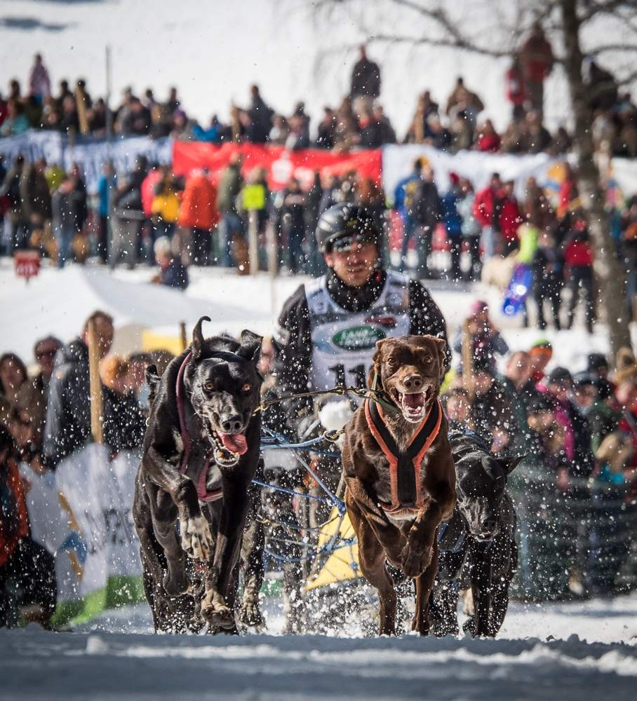 sled dog6 The World Championship of Sled Dog in Black Forest, Germany