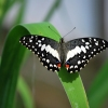 Butterfly World – How to Spend Sunday Afternoon