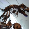 The Largest Collection of Dinosaur Fossils in North America