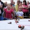 World Snail Racing Championships