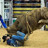 Little Boy Dreams About Pro Bull Rider