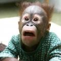 Funny Monkey Face Pics
