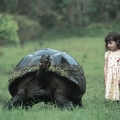 Galapagos Gaint Tortoise