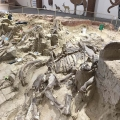 Mammoth Site of Hot Springs in S...