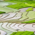 Amazing Place – Rice Terra...