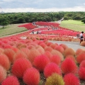 Hitachi Seaside Park, Hitachinak...