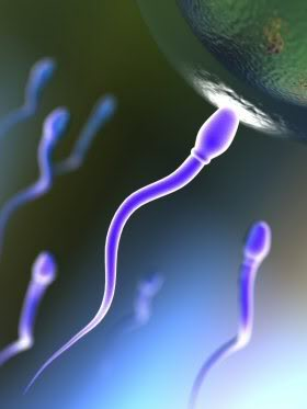 sperm motility6 Get Pregnant of Partners Lazy Sperm