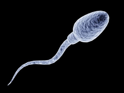 sperm motility8 Get Pregnant of Partners Lazy Sperm