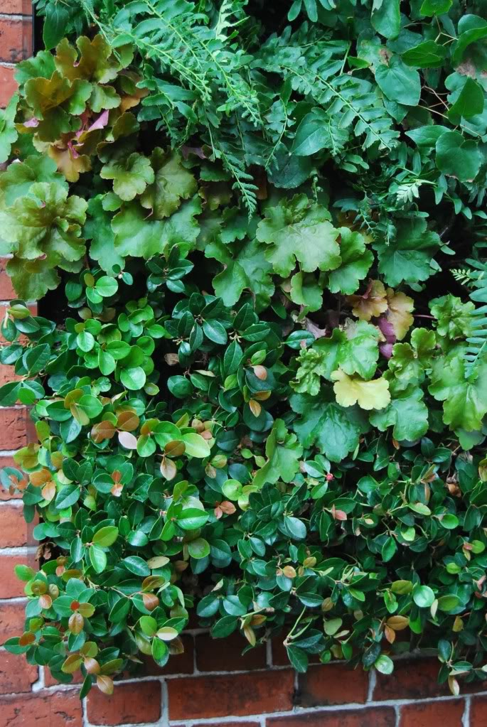 vertical gardens5 How to build a Vertical Garden aka Living Wall