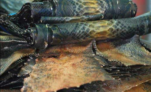 snake 101 How To Get Fresh Snake Skin For Your New Bag Or Shoes