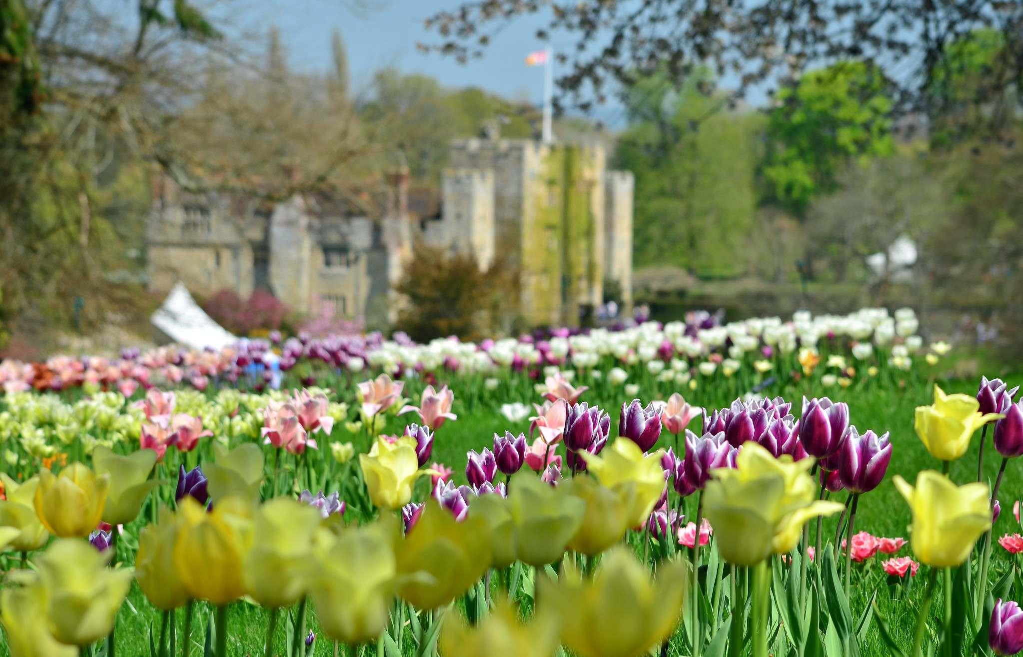 hever castle8 Tulip Festival  at Hever Castle, Kent