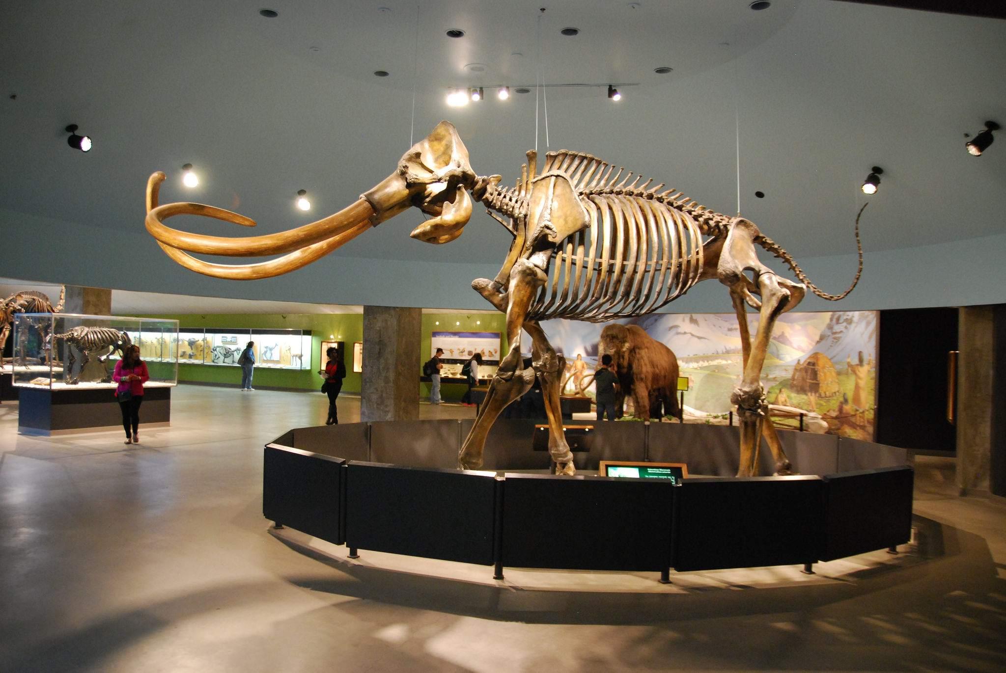 la brea tar pits La Brea Tar Pits and Museum in LA
