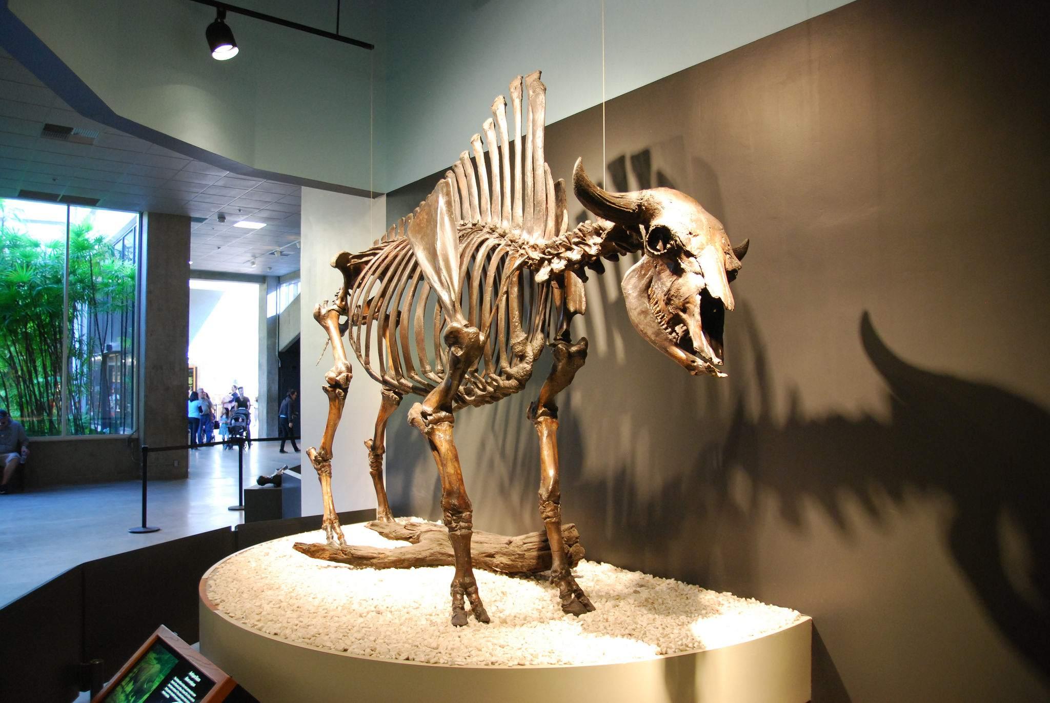 la brea tar pits1 La Brea Tar Pits and Museum in LA