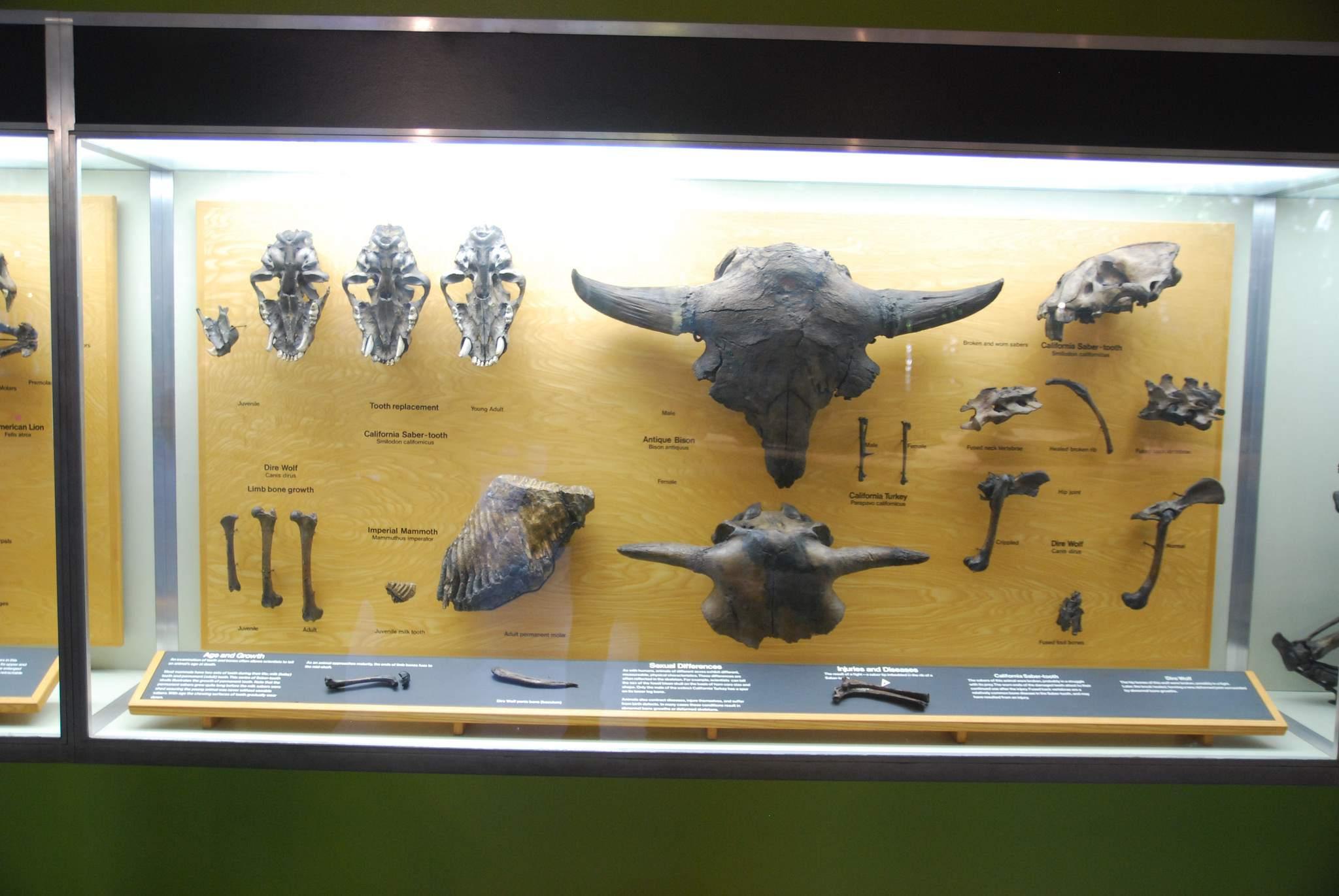 la brea tar pits5 La Brea Tar Pits and Museum in LA