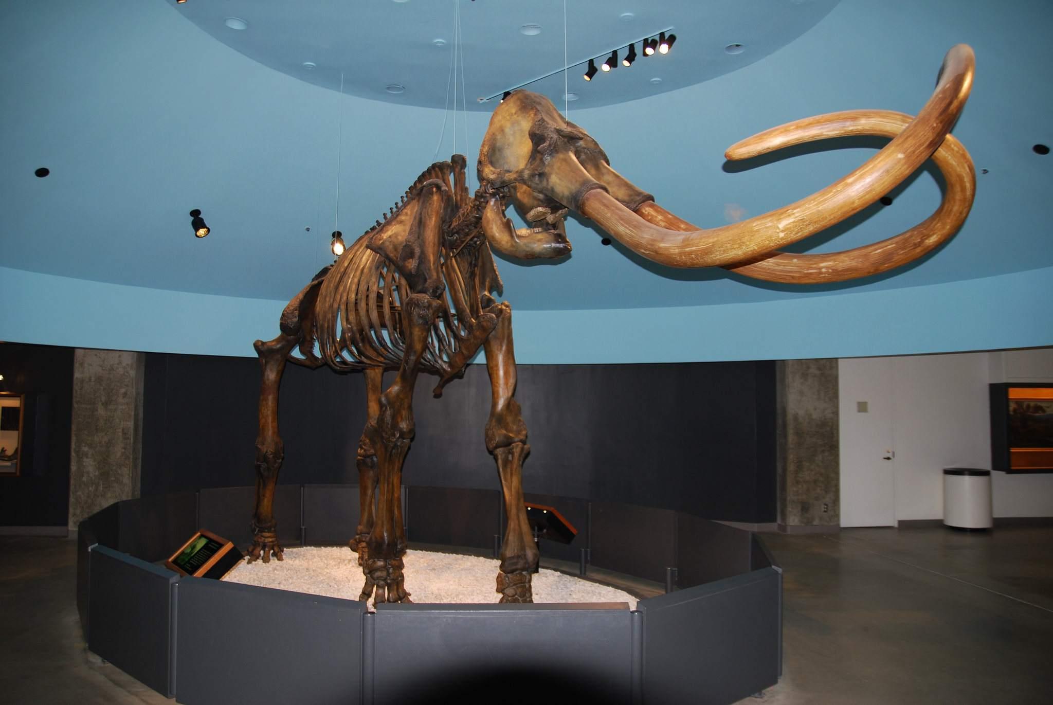 la brea tar pits7 La Brea Tar Pits and Museum in LA