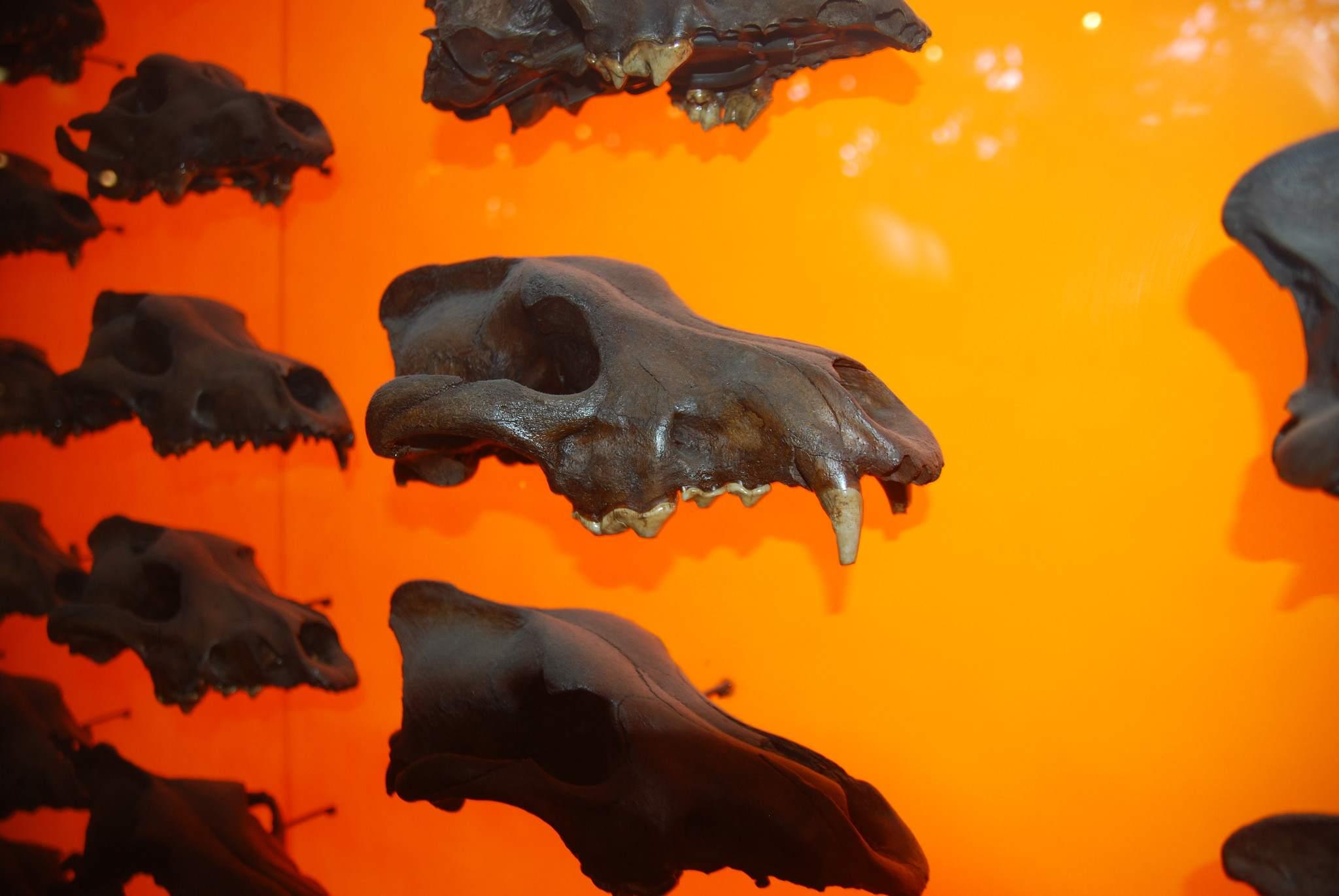 la brea tar pits9 La Brea Tar Pits and Museum in LA