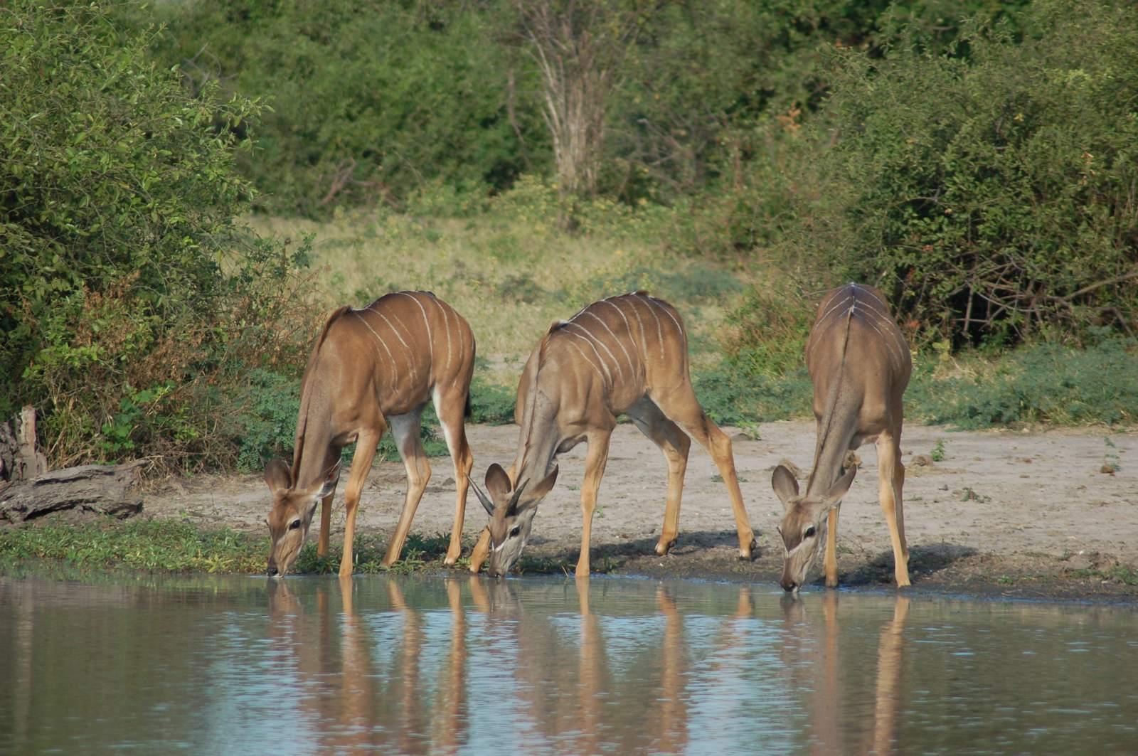 chobe riverfront10 Chobe Riverfront, Visit Botswana