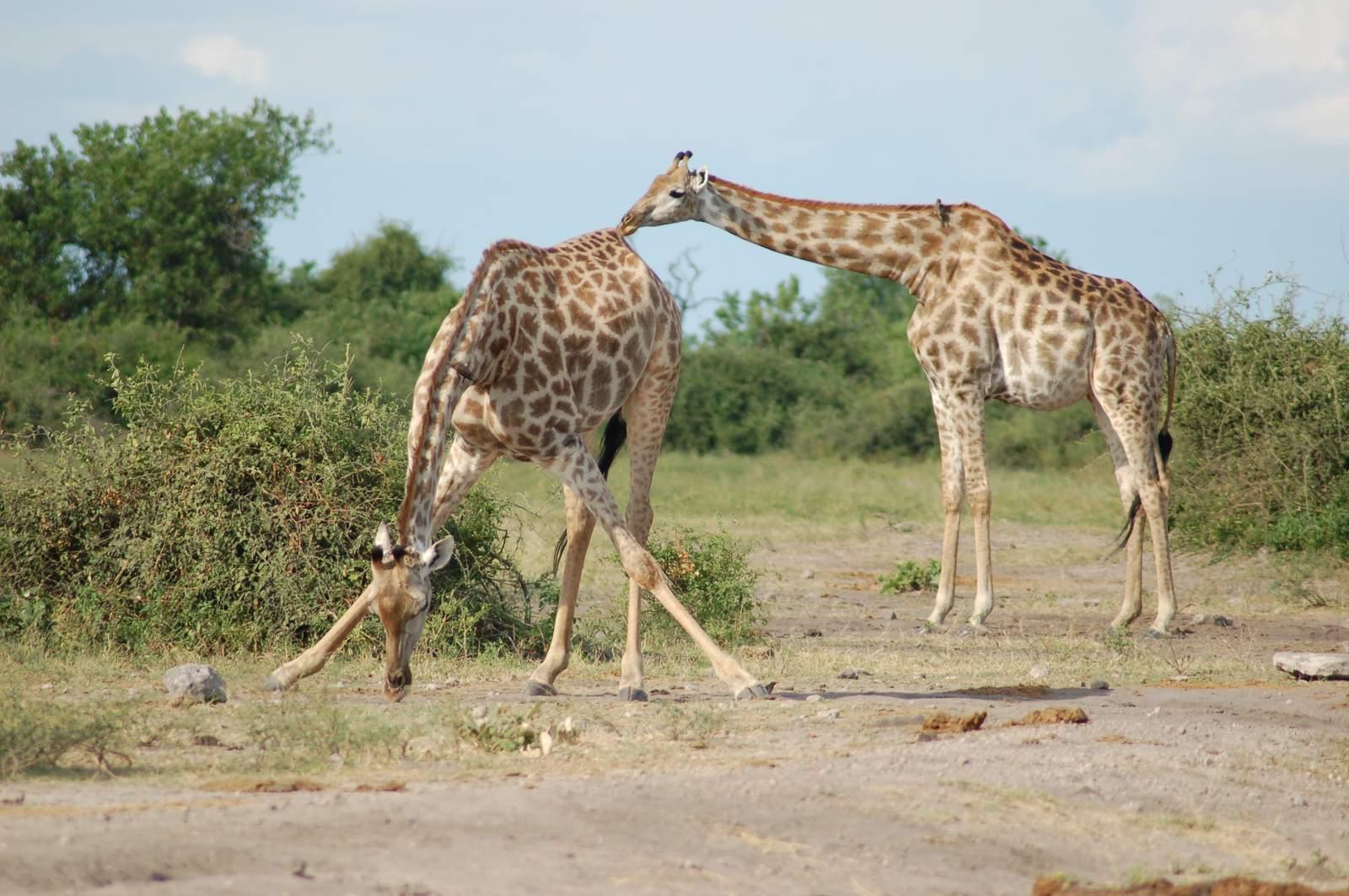 chobe riverfront9 Chobe Riverfront, Visit Botswana