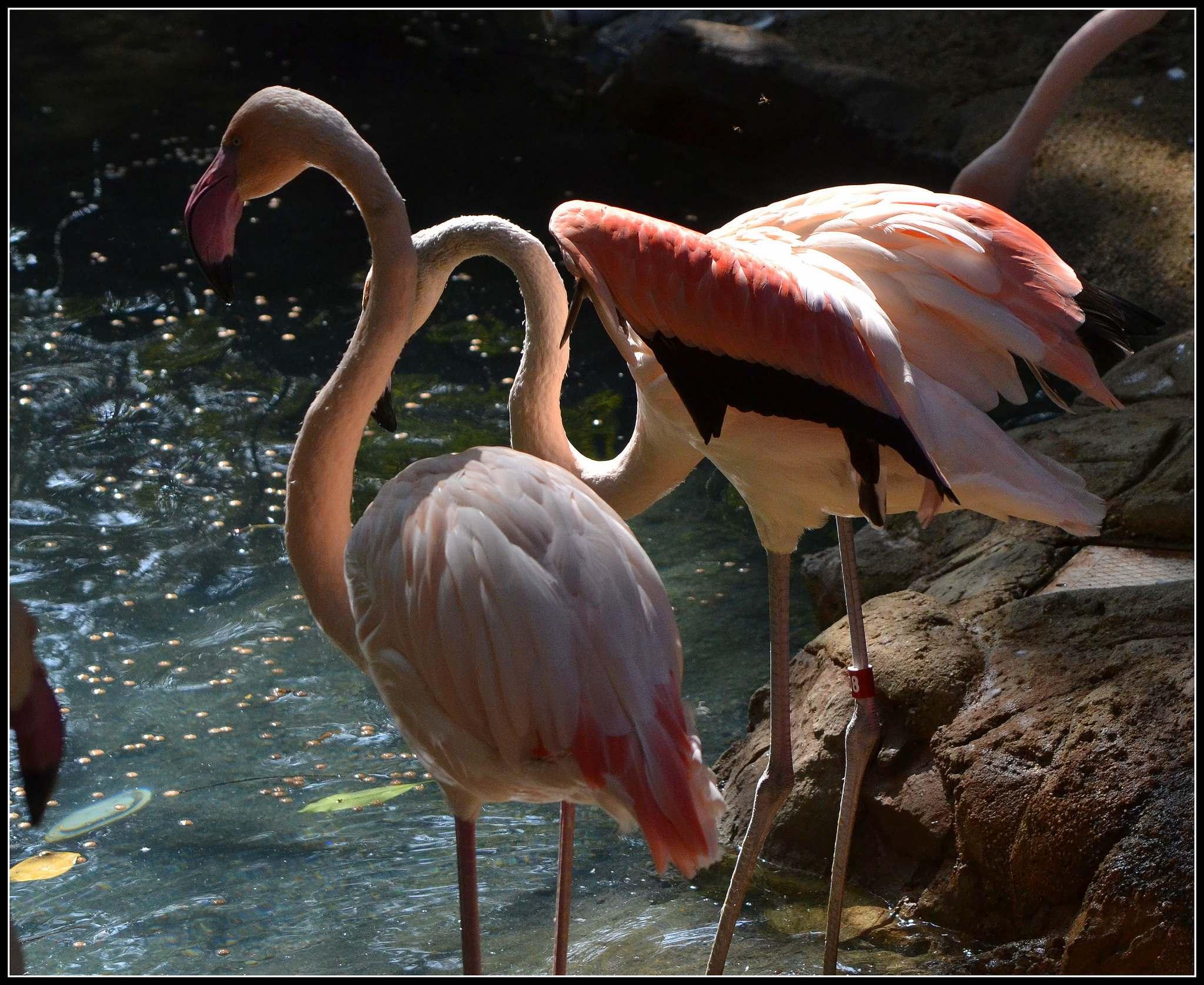 los angeles zoo12 Los Angeles Zoo Facts