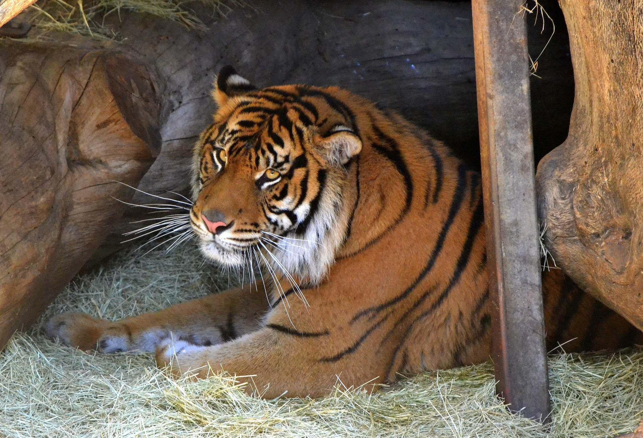 los angeles zoo2 Los Angeles Zoo Facts