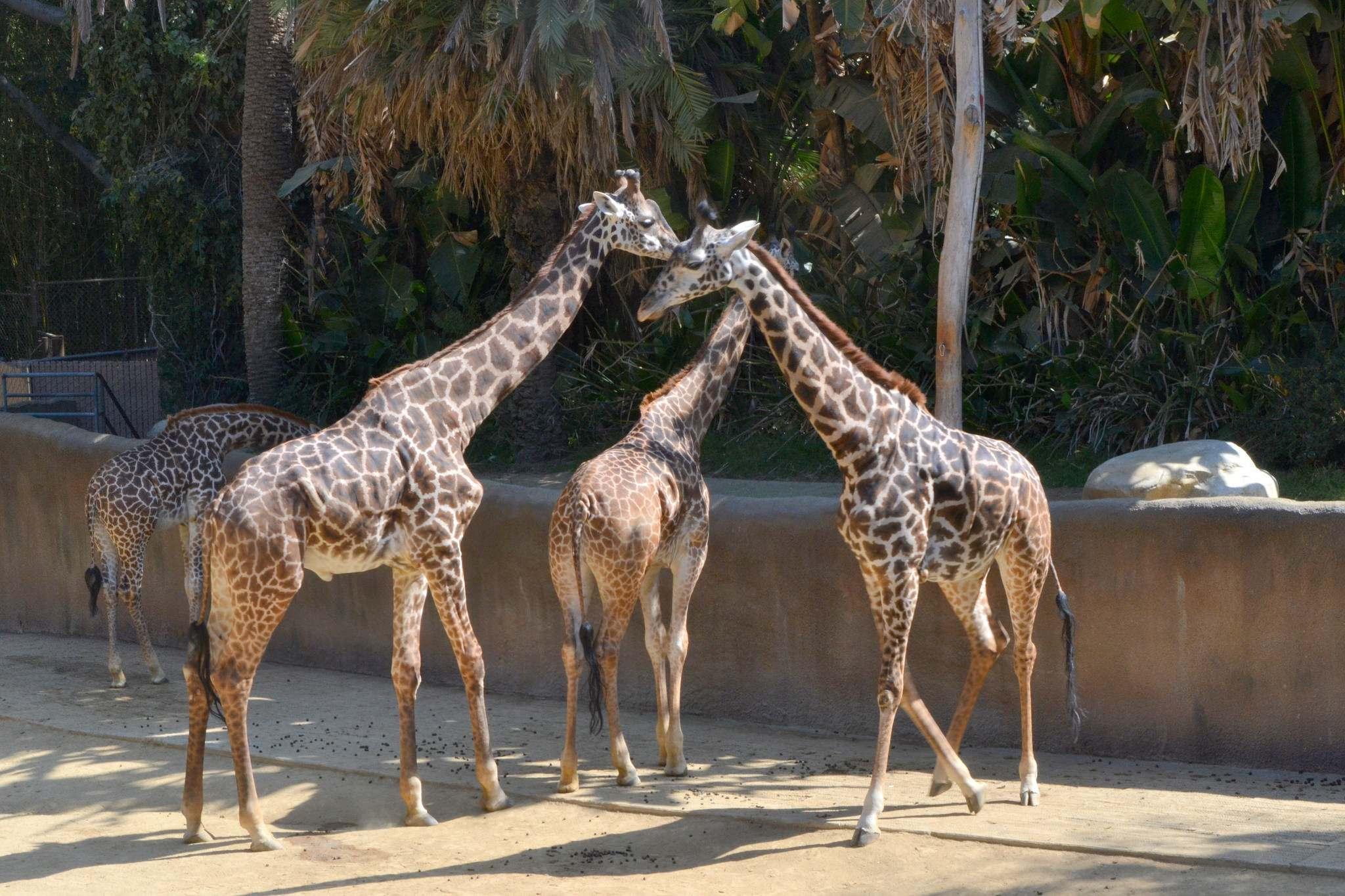 los angeles zoo4 Los Angeles Zoo Facts