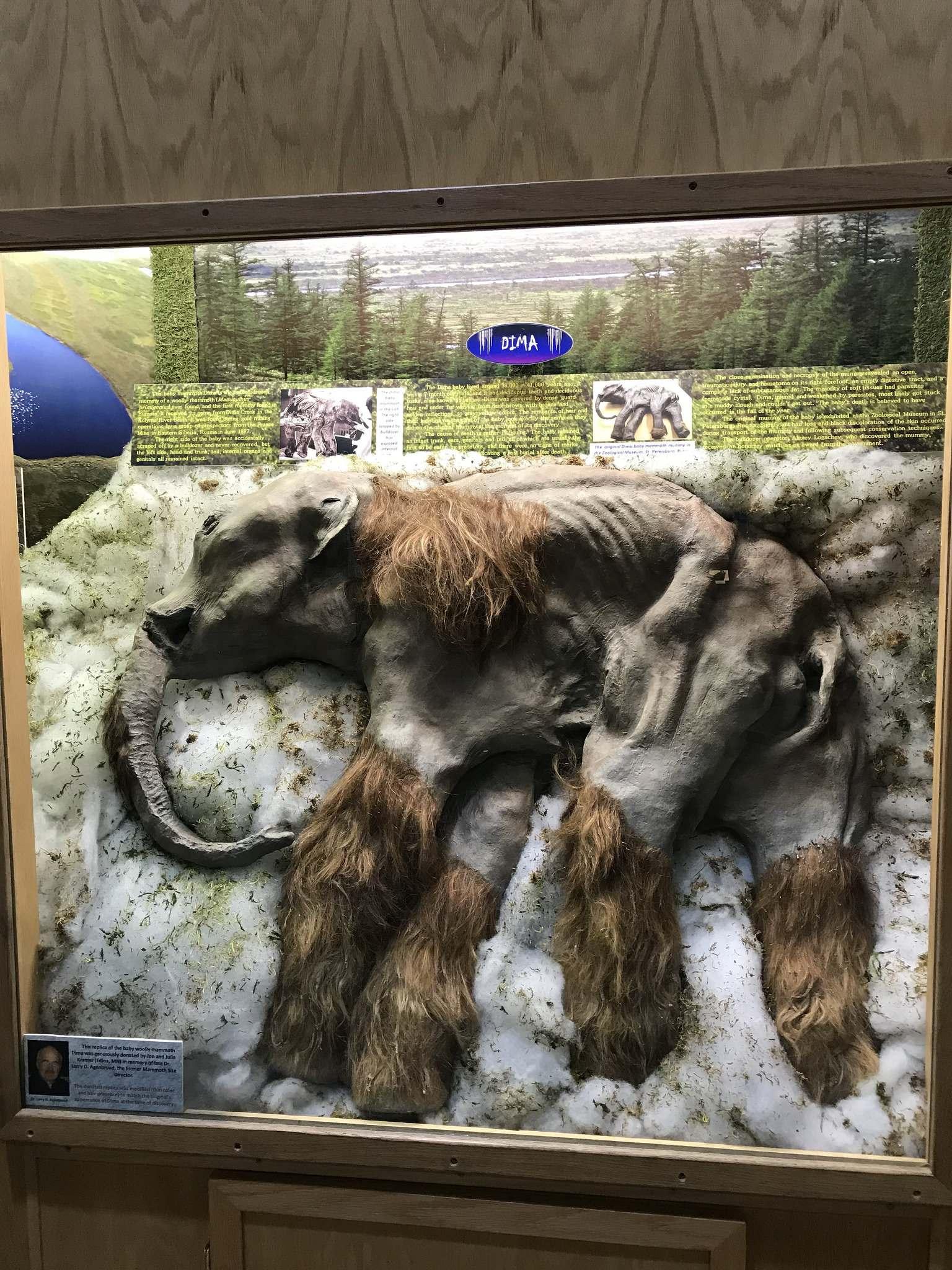 mammoth site1 Mammoth Site of Hot Springs in South Dakota
